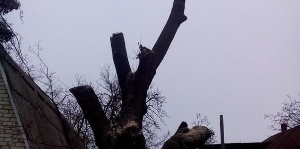 Спилим дерево